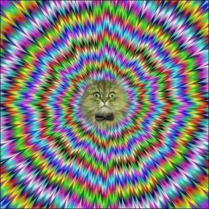 flicker-cat