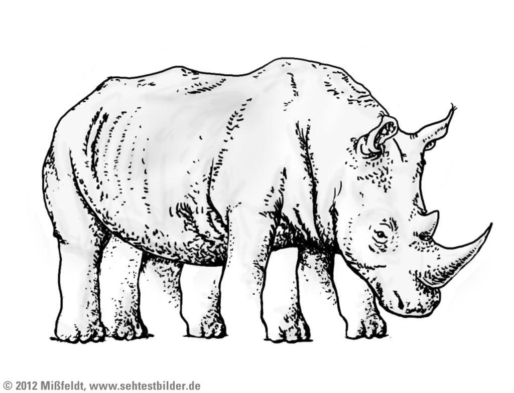 Nashorn mit vielen Beinen