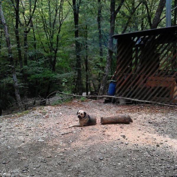 Zersägter Hund