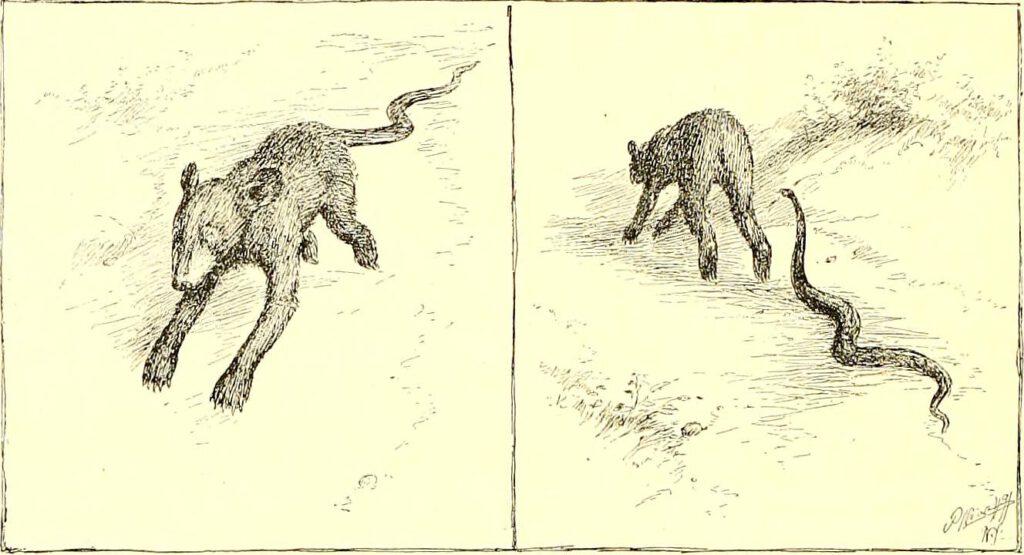 Tier mit Schwanz/Schlange