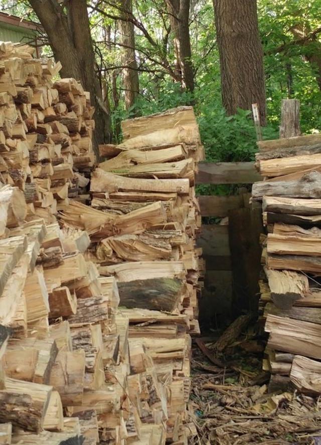 Katze/Holzstapel