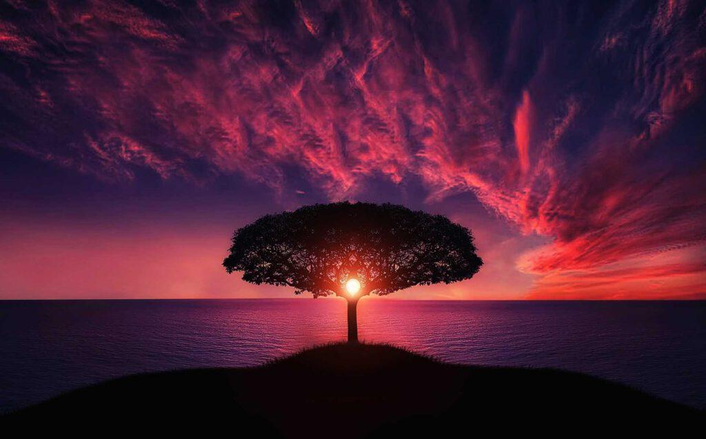 Sonnenbaum